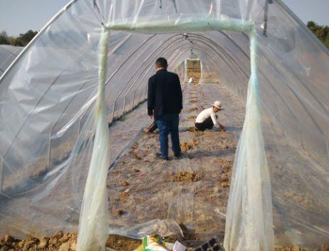 舒安农业服务中心加强春耕生产指导工作